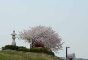 200403sakura00